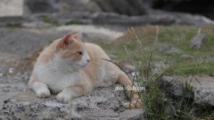 城ヶ島海岸の猫
