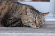 城ヶ島 猫